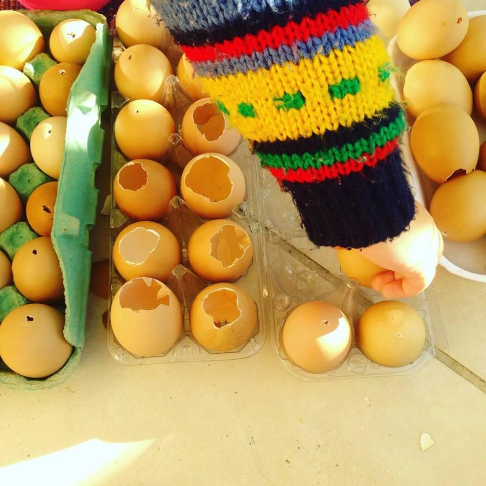 Mãe e filha usam cascas de ovos para fazer mudas e doá-las nas ruas