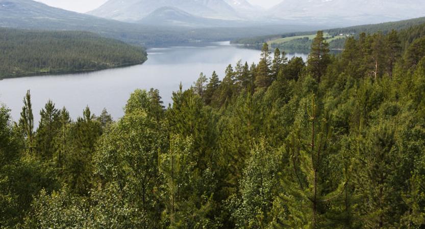 Noruega é a primeira nação do mundo a proibir o corte de árvores em todo o território nacional 1