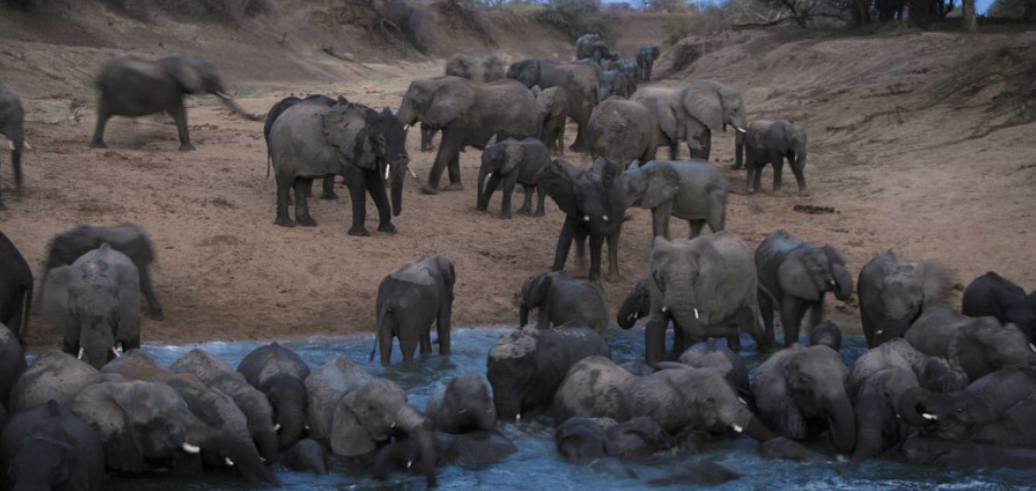 Angola torna ilegal a caça e a venda de carne de animais selvagens 1