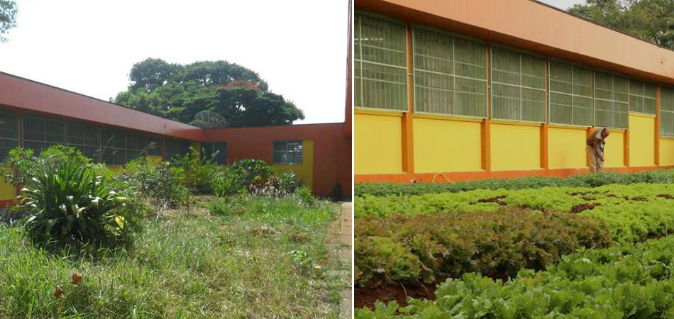 Escola pública transforma espaço vazio em horta 2