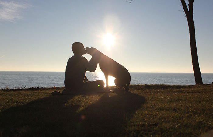 Cadela diagnosticada com câncer terminal é levada para uma viagem de despedida emocionante 1