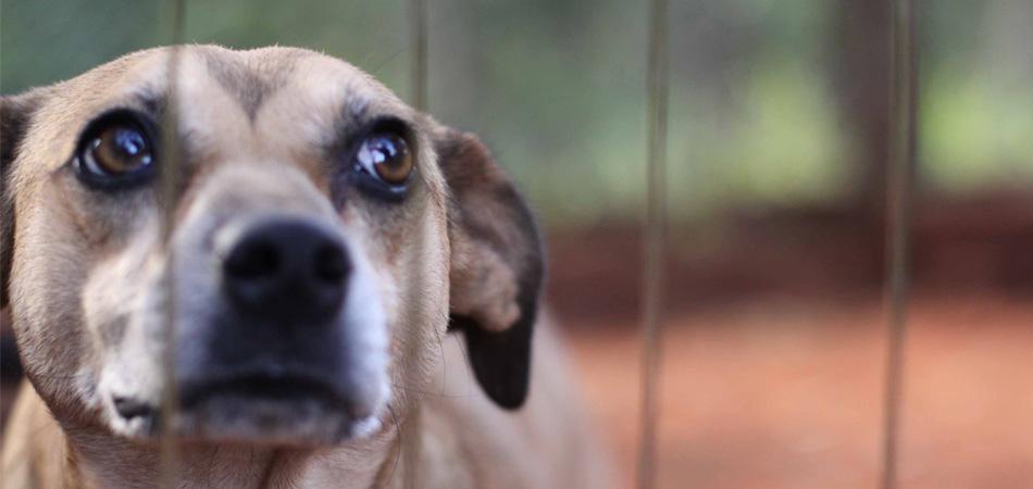 Como a Holanda se tornou o primeiro país do mundo sem cães abandonados 1