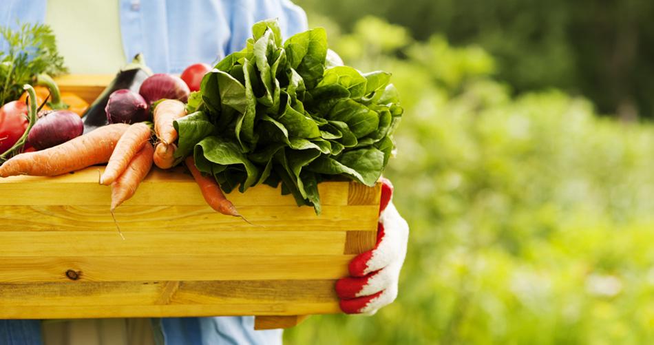 Site entrega alimentos orgânicos em casa a preços bem abaixo do mercado 1