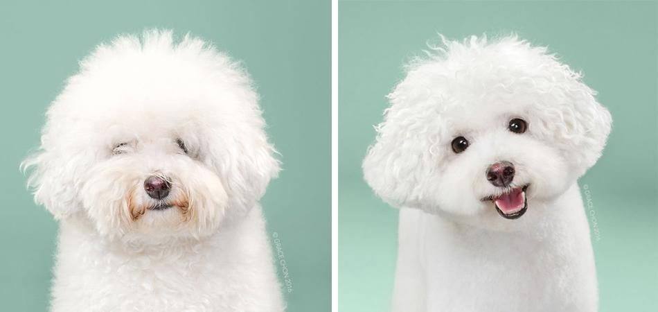 Alerta fofura: O antes e o depois de cachorros que ganharam novo visual 1