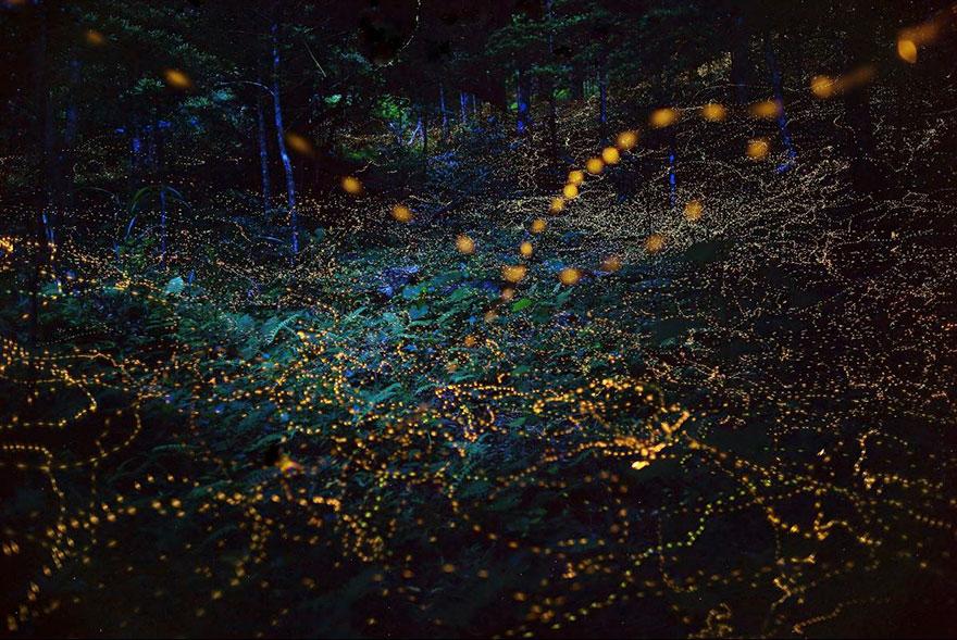 fireflies-long-exposure-photography-2016-japan-14