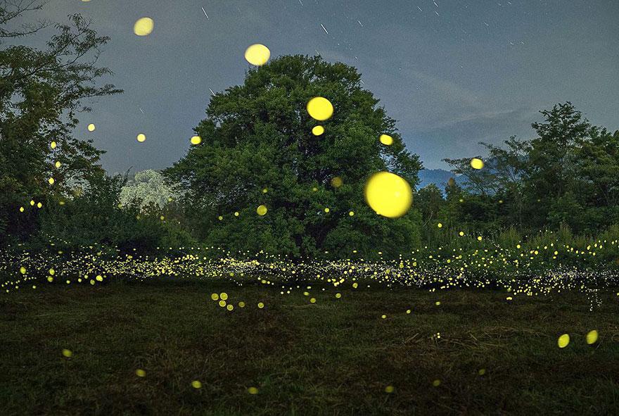 fireflies-long-exposure-photography-2016-japan-15