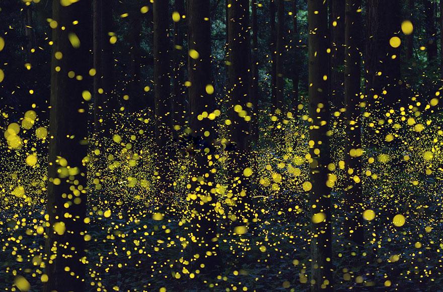 fireflies-long-exposure-photography-2016-japan-18