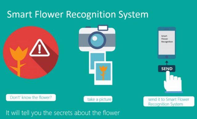 flower-project1-2-1024x619-640x387