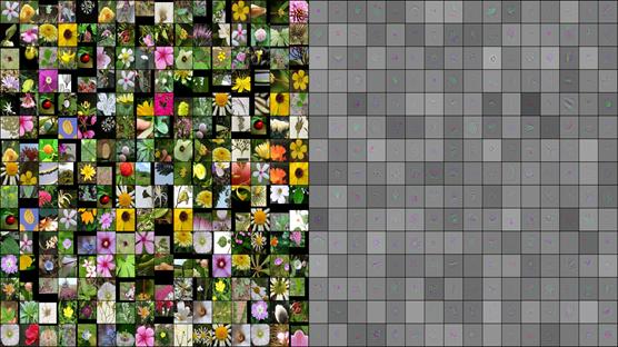 flower-project2