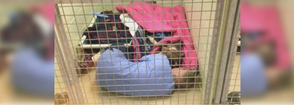 Funcionária deita no chão do canil para confortar cadela após cirurgia 1