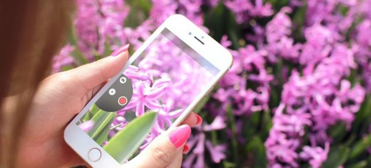 Microsoft desenvolve app que identifica espécies de flores através de uma foto 1
