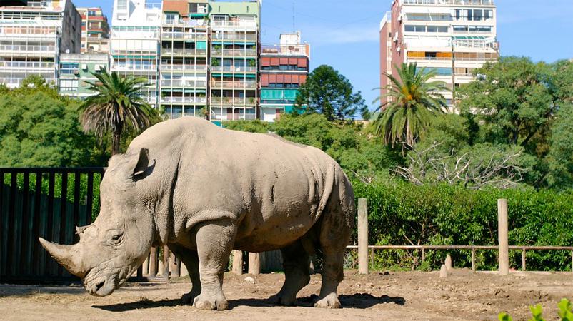 Prefeito de Buenos Aires vai fechar zoológico da cidade e devolver animais à natureza 1