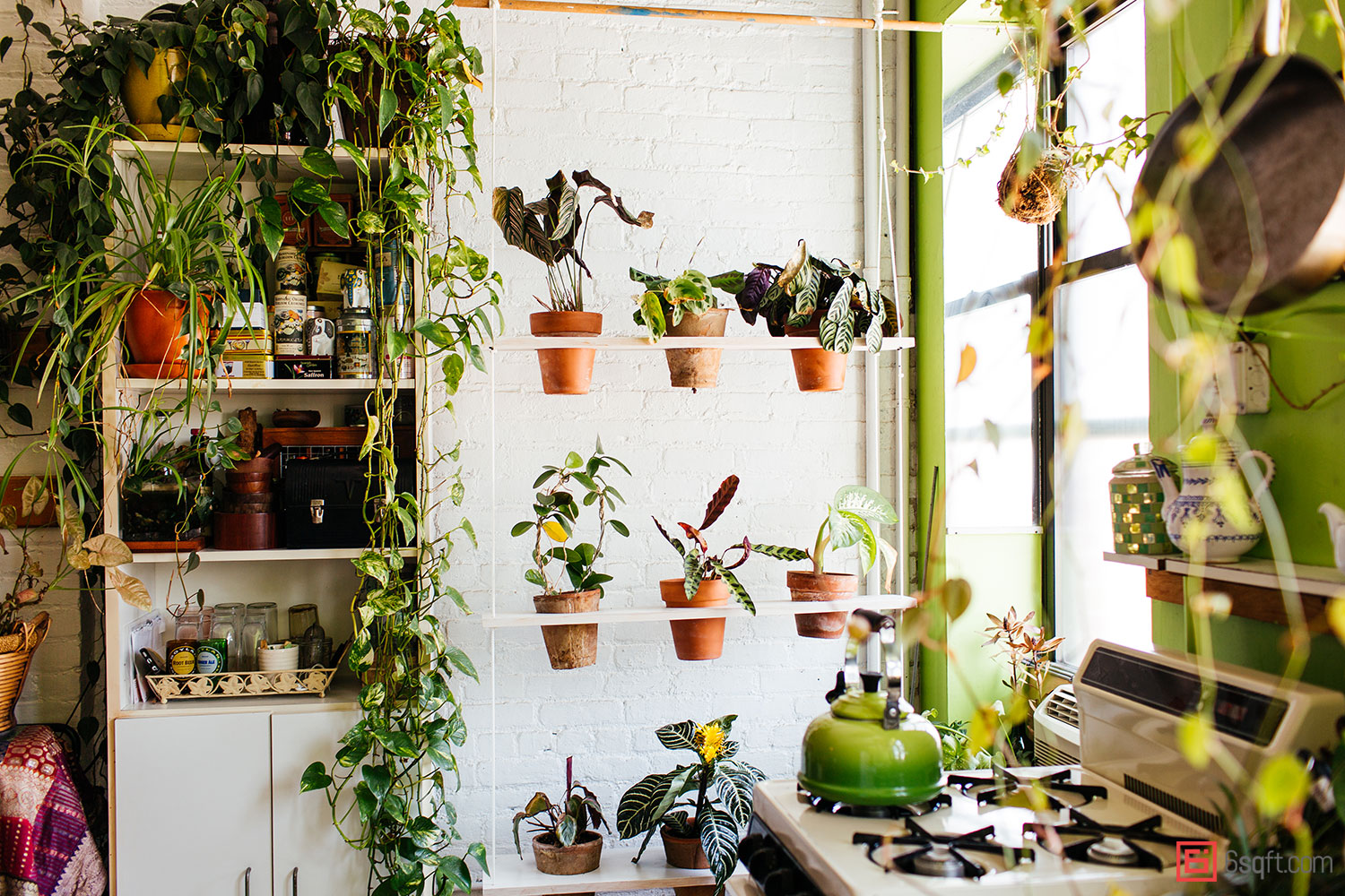 Summer-Rayne-Oakes-Plant-Filled-Apartment-in-Williamsburg-Brooklyn-hanging-plant-shelf