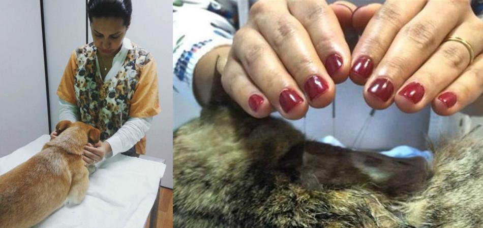 Veterinários promovem Reiki Solidário para animais 1