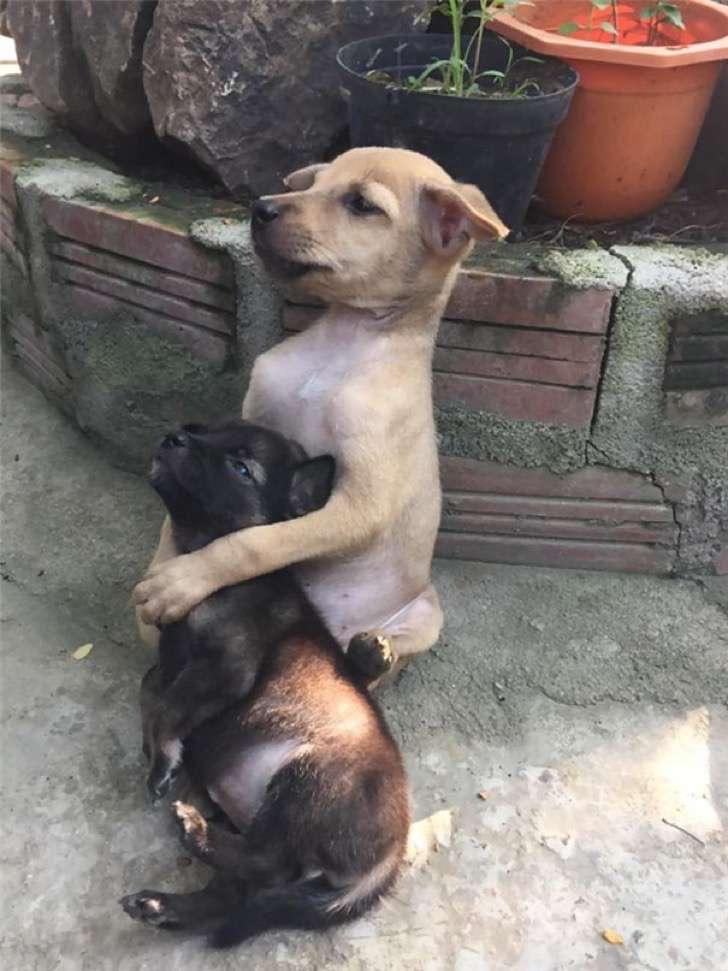 adopted-dogs-cuddle-buddhist-nuns-china-6-2