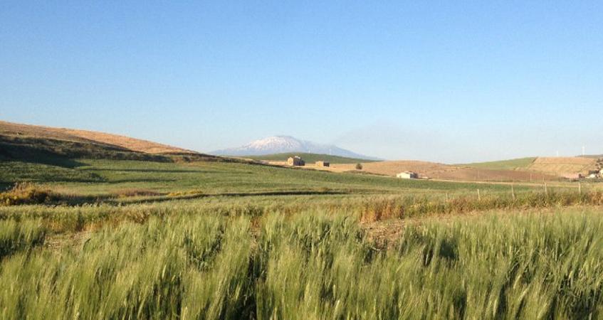 Agricultores da Itália recuperam sabedoria milenar e vencem multinacionais 1