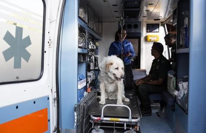 Voluntários socorrem animais vítimas de terremoto na Itália em ambulâncias 2