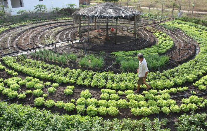Dinamarca será o primeiro país do mundo 100% orgânico até 2020
