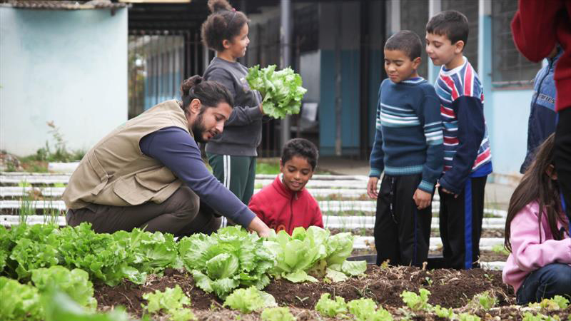 Manual dá dicas sobre a criação e o aproveitamento de hortas nas escolas 1