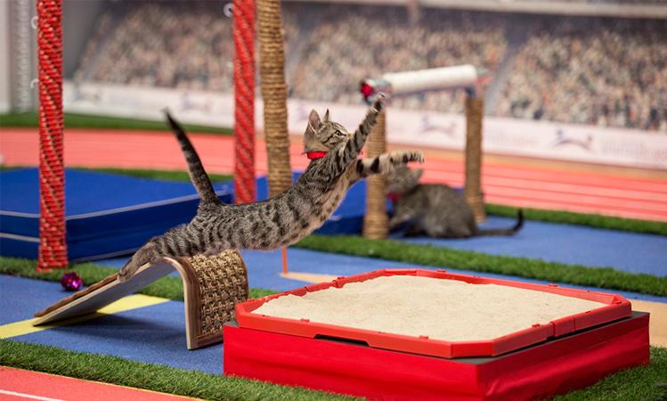 Canal de TV norte-americano transmite Olimpíadas de gatinhos para incentivar adoção dos peludos 3