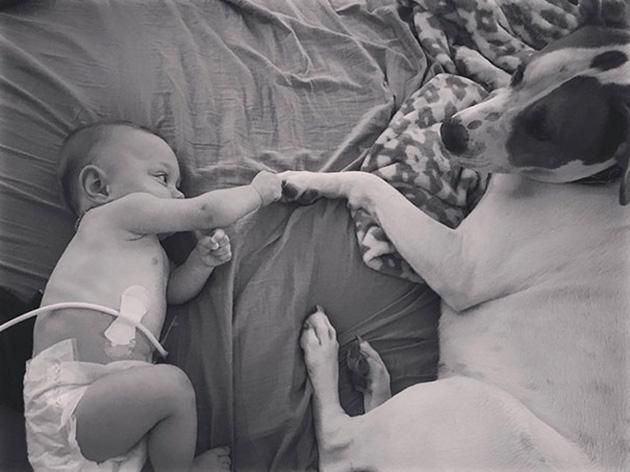rescue-dog-baby-friends-jpeg-addie-belle-6