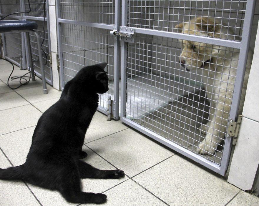lucik-cat-doctor-57d10328c7191__880