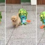 Cãozinho sem uma pata brincando com mascote dos Jogos Paralímpicos é puro amor 6