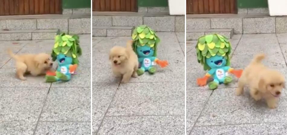 Cãozinho sem uma pata brincando com mascote dos Jogos Paralímpicos é puro amor 1