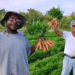 fazenda de orgânicos