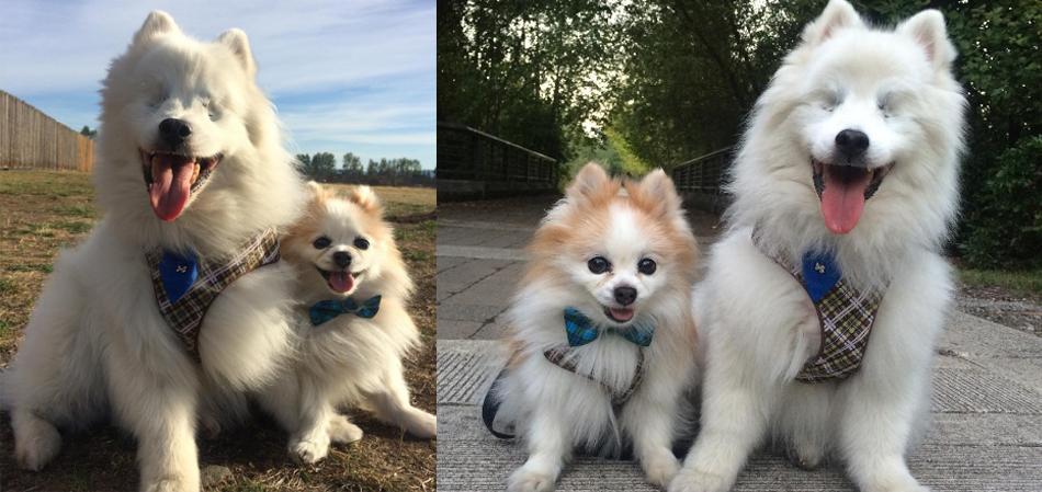 A linda amizade de um cachorro que serve de guia para um cão cego 7