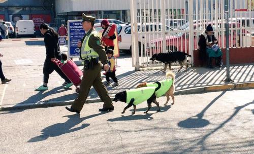 policiais-adotam-cachorros-chile-500x304