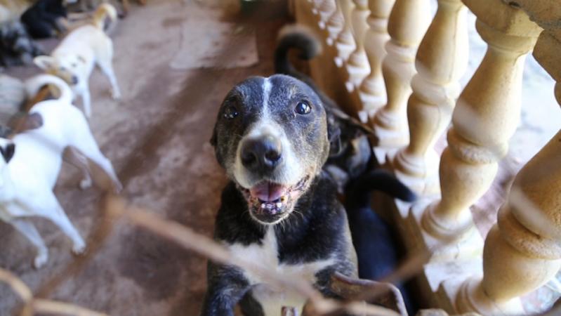 Santuário de animais abandonados abriga 400 cães e gatos no interior de SP 1