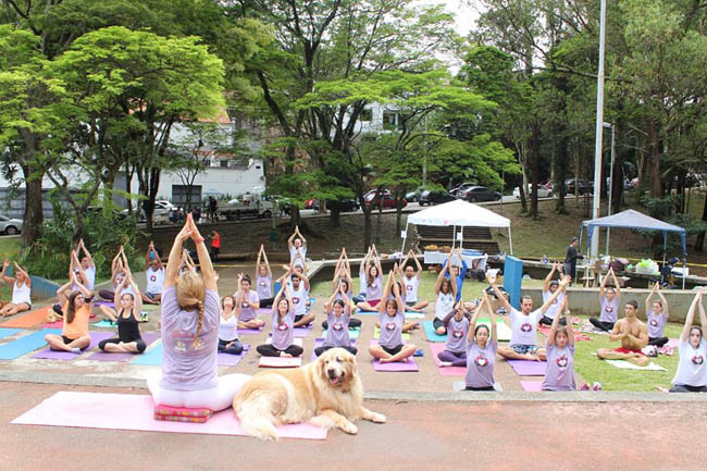 yoga-run-dogs-n-cats