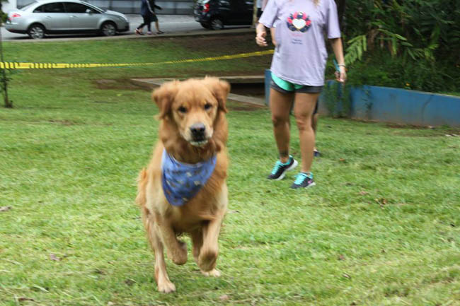 yoga-run-dogs-n-cats6