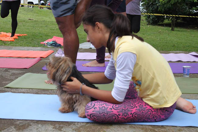 yoga-run-dogs-n-cats7
