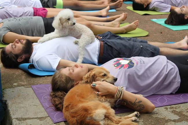 yoga-run-dogs-n-cats8