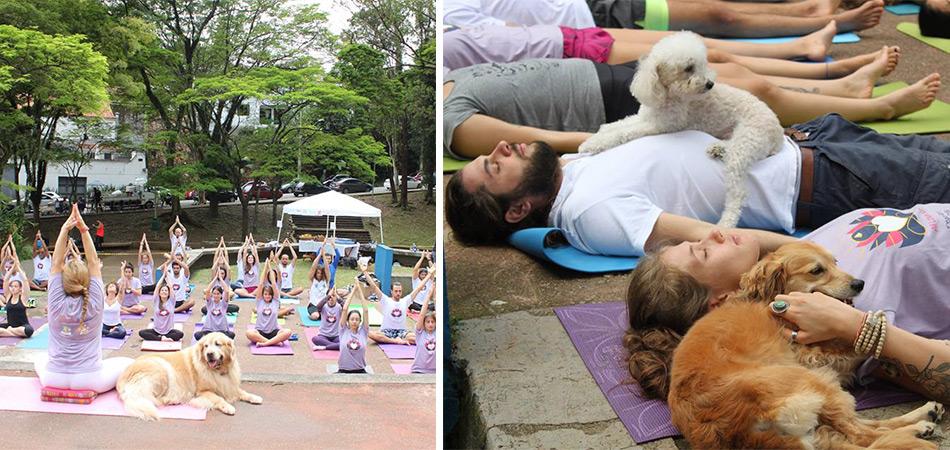 Evento com corrida, yoga e comida vegan terá 100% da renda revertida para Ongs de animais 2