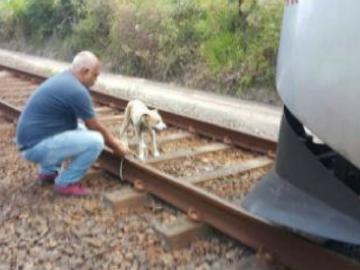 Maquinista para trem para resgatar cãozinho amarrado nos trilhos 5