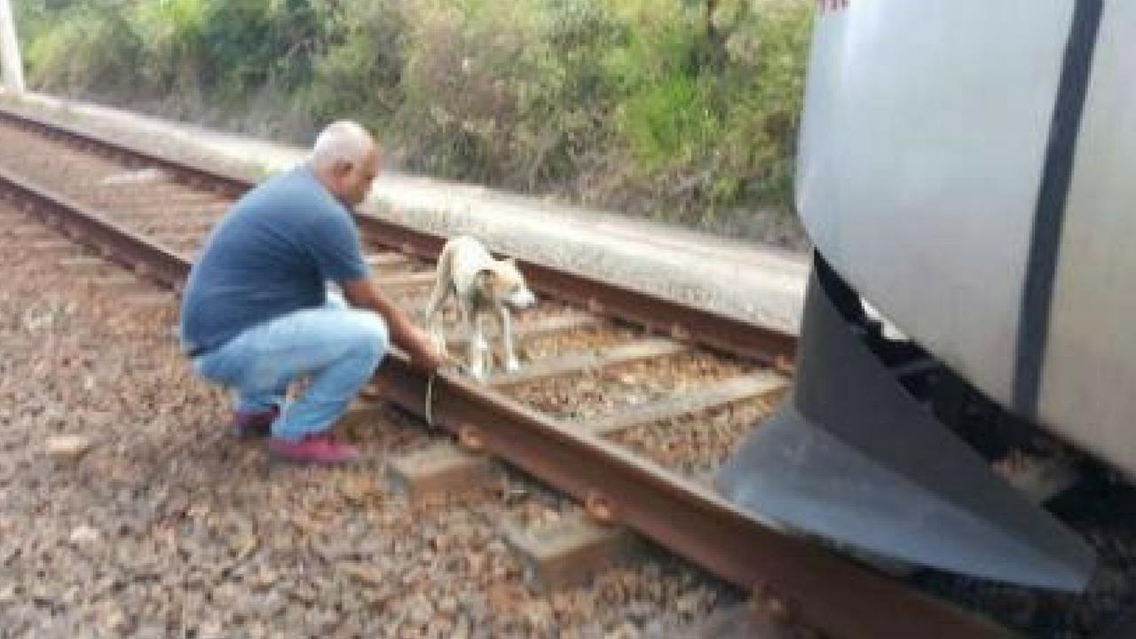 Maquinista para trem para resgatar cãozinho amarrado nos trilhos 2