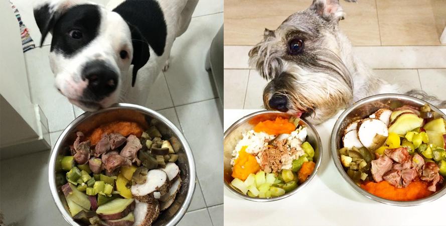 dieta para cães