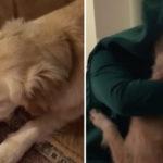 Este homem se vestiu como o brinquedo favorito do seu cão e lhe fez uma baita surpresa 4