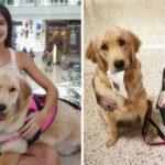 Esta cachorrinha ajuda a dona, que sofre de narcolepsia, nas tarefas domésticas e nas compras 5