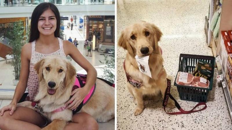 Esta cachorrinha ajuda a dona, que sofre de narcolepsia, nas tarefas domésticas e nas compras 3