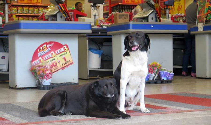 Casal de cães vai diariamente ao mercado esperar pelo dono falecido há dois anos em SP 1