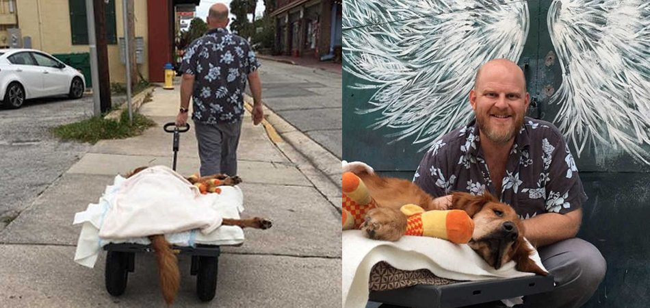 Tutor leva cão debilitado por causa de um câncer para passear deitado em um carrinho 5