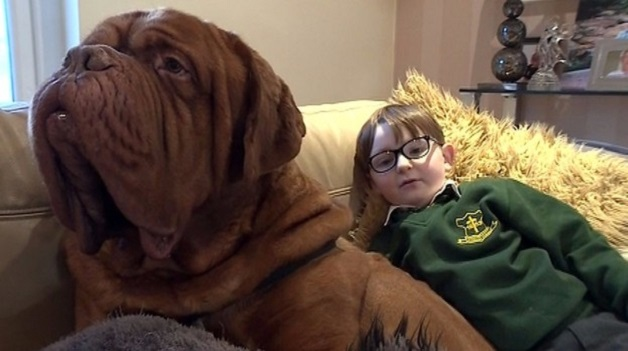 415509-mark-cannon-and-alfie-the-french-mastiff-march-2-2016-stv-grab