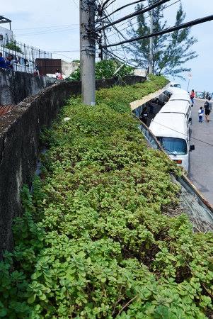 parada-verde-foto-selmy-yassuda-veja-rio
