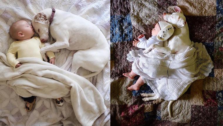 Cadela resgatada de maus tratos encontra paz em bebê de apenas 11 meses 1