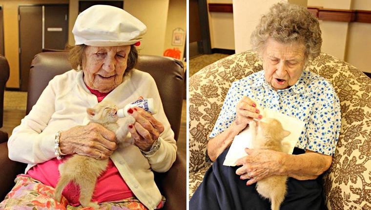 Idosos de lar cuidam de gatinhos órfãos resgatados e promovem sua adoção 3