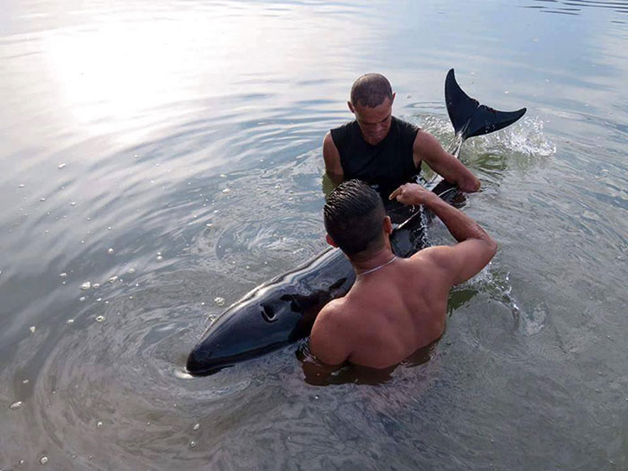 surfers-rescue-baby-whale-stranded-costa-rica-1